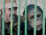 Godina majmuna, Blazevski