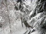 Otkazivanja zbog snega